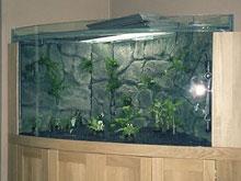 aquarium-inrichting-hans